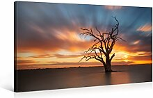 Picanova Dead Tree Sunset 100x50cm – Premium