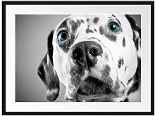 Picati aufmerksamer Dalmatiner Bilderrahmen mit