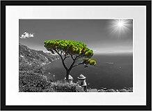 Picati Baum am Mittelmeer Bilderrahmen mit