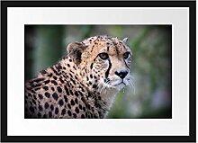 Picati bildschöner Gepard Bilderrahmen mit