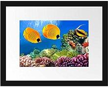 Picati Fische Korallenriff Bilderrahmen mit