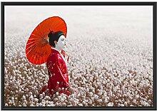 Picati Geisha auf dem Feld im Schattenfugen