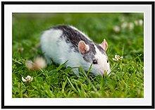 Picati kleine Maus auf Blumenwiese Bilderrahmen
