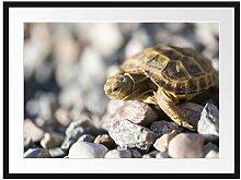 Picati Kleine Schildkröte Bilderrahmen mit