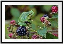 Picati Kleiner Frosch auf Brombeerstrauch
