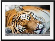 Picati müder Tiger Bilderrahmen mit