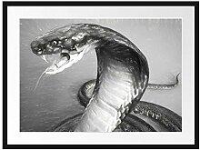 Picati Nahaufnahme Einer Cobra Kunst Bilderrahmen