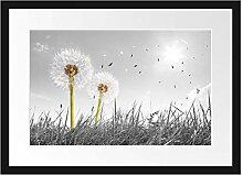 Picati Pusteblumen auf Wiese Bilderrahmen mit