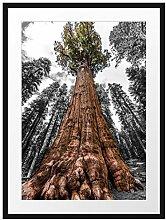 Picati Riesenbaum Regenwald Bilderrahmen mit