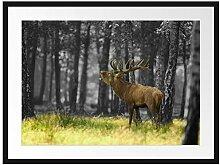 Picati röhrender Hirsch im Wald Bilderrahmen mit