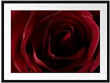 Picati Rote Rose Bilderrahmen mit