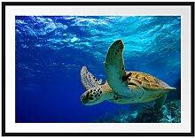 Picati Schildkröte im Riff Bilderrahmen mit