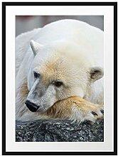 Picati schlafender Eisbär Bilderrahmen mit
