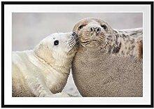 Picati Schmusende Robben Bilderrahmen mit