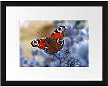 Picati Schöner Schmetterling Pfauenauge