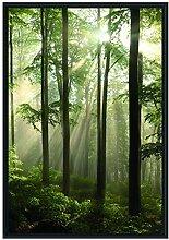 Picati Sonnenstrahlen im Wald im Schattenfugen