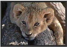 Picati Süßes Löwenbaby im Schattenfugen
