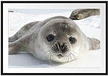 Picati Süßes Robben Baby Bilderrahmen mit