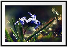 Picati Wiesenblumen Morgen Bilderrahmen mit