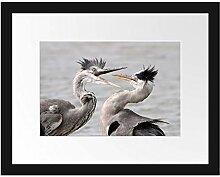 Picati Zankende Vögel Bilderrahmen mit