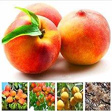 Pinkdose 10 Stücke Bonsai Aprikosenbaum Pflanze