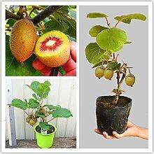 Pinkdose 100 teile/beutel kiwi bonsai pflanze