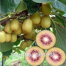 Pinkdose 100 teile/beutel Kiwi Thailand Mini Kiwi