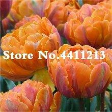 Pinkdose 100pcs Seltene Kleine Hibiskus-Blume