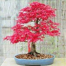 Pinkdose 20 Mini schöne japanische rote