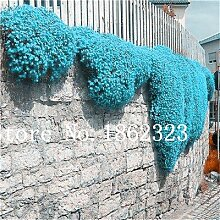Pinkdose 200 Stück Bonsai ROCK Kresse Blume