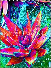 Pinkdose 200 stücke Aloe Planta Mix