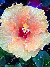Pinkdose 200pcs / bag Hibiskus-Blume Bonsai Blume
