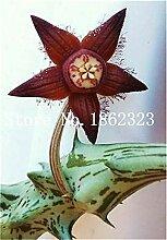Pinkdose 200pcs / lot Fritillaria Fingerhut