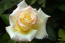 Pinkdose 2016 25 Arten Rose 100pcs / bag einer Art
