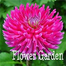 Pinkdose 24 Arten von Dahliegarten, Typ
