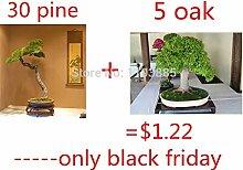 Pinkdose 30 PC/bag japanische Bonsai-Kiefer und 5