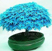 Pinkdose 40pcs / bag Ahornbaum Bonsai-Baum
