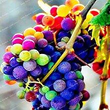 Pinkdose 50 PC Grape Bonsai Rare Alter Hof