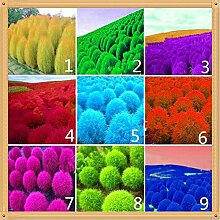 Pinkdose 500 Stück Pflanze Gras Staude Gras
