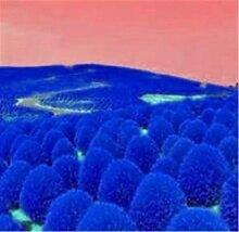 Pinkdose 500 stücke Gemischt Gras Pflanze