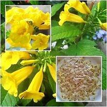 Pinkdose® Blühende Pflanze