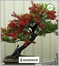 Pinkdose Blume Bonsai-Baum-Samen australische