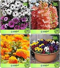 Pinkdose® Blumensamen: Pflanzensamen für