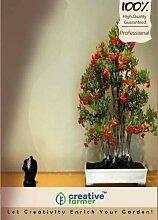 Pinkdose Feuerdorn Bonsai Samen Seed