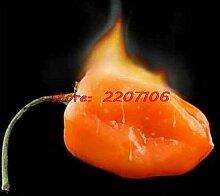Pinkdose Gemüse Bonsais Habanero orange