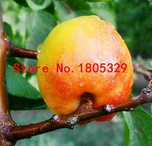 Pinkdose Gemüse und Fruchtsamen Aprikosenbaum
