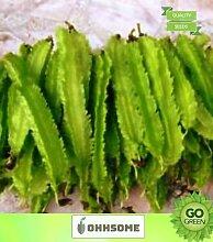 Pinkdose Gemüsesamen Bohnen-Samen - Winged