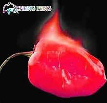 Pinkdose Habanero orange Paprika-Pfeffer-Pflanze -