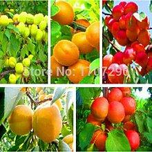Pinkdose Hinterhof Obst Aprikosenbaum-Samen sehr