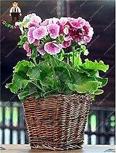 Pinkdose New 100pcs / bag Pelargonium Peltatum